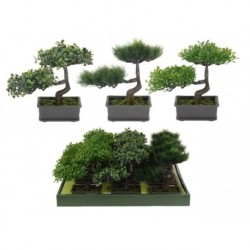 ÁRBOL BONSAI
